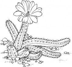 Illustration cactus universul copiilor: Imagini de colorat cactus