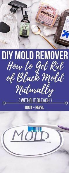 3664 Best Mold Health Images Chronic Illness Mold Exposure
