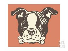 Boston Terrier with Bone in Its Mouth Print by Pop Ink - CSA Images at Art.com