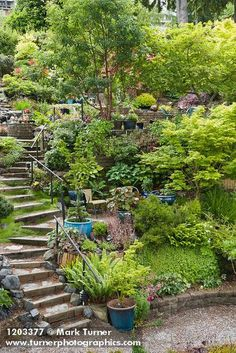 hillside garden design ideas - Google Search | Ideas for the House ...