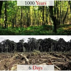 Protect our forests. www.dogwoodalliance.org