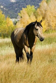 If someone got me a buckskin horse, I would cry. Happy, hysterical crying. I would be beside myself.