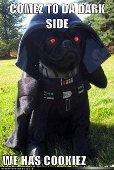 funny dog pictures - Wat kinda cookiez?