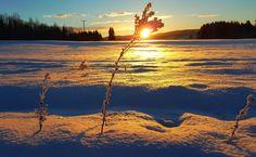 Soloppgang i februar, et bilde.