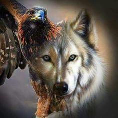 Eagan and Grey Wolf