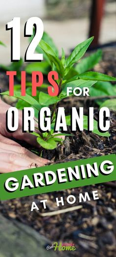 12 Tips for Healthy Organic Gardening at Home