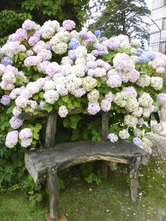 Hydrangeas & rustic bench, perfect for a shady spot in the garden