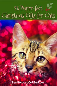 25 Purrr-fect Christmas Gifts for Cats! We have come up with a list of perfect presents that are certain to please! We are sure that you can find exactly what you are looking for on our list of Christmas gifts for kitties. Heated Cat House, Heated Outdoor Cat House, Heated Cat Bed, Christmas Ties, Great Christmas Gifts, Cat Backpack Carrier, Heating Pads, Cute Stockings, Cat Sweaters