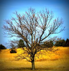 Bare tree  Photography