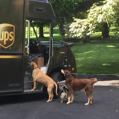 Cheapest Dog Vaccinations Near Me Puppy Chew Toys, Funny Animals, Cute Animals, United Parcel Service, Cats Bus, Training Your Dog