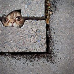 I will always wonder if this in a wall or under ground.