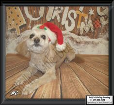 Ellie Small Breed, Dog Grooming, Dogs, Animals, Animales, Animaux, Pet Dogs, Doggies, Animal