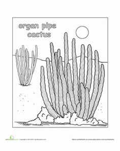 coloring pages for saugaros | Color the Saguaro Cactus | Worksheets and Cacti