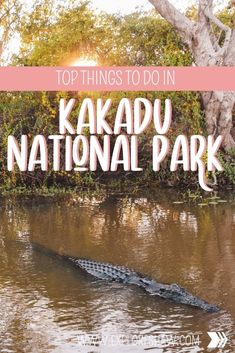 Immerse yourself in Aboriginal history and natural beauty, with our guide to the top things to do in Kakadu National Park. #northernterritory #australia Australia Destinations, Australia Travel Guide, Amazing Destinations, Travel Destinations, Kakadu National Park, National Parks, Travel Guides, Travel Tips, Darwin Australia