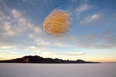Blowing in the wind | John Burcham | A tumbleweed flies through the air at Utah's Bonneville Salt Flats. Although we think of tumbleweeds as standard fixtures in any Western, the plants are not native to the United States—they originated in the Eurasian steppes.