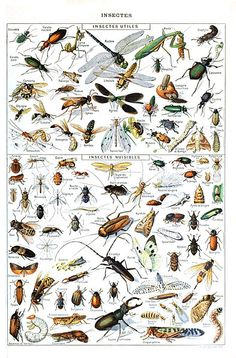 File:Insects Larousse.jpg