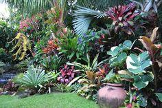 Hundscheidt Garden, Brisbane  Bismarkia palm - stunning backdrop