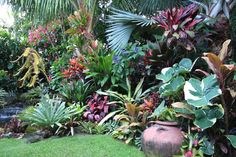 1000 Images About Tropical Garden On Pinterest Tropical Gardens Tropical Plants And Tropical
