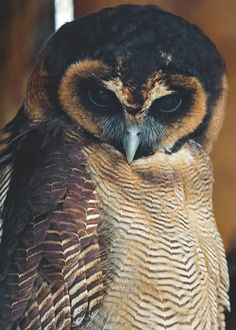 Medicine: Illuminates deception  Owl can see that which others cannot, which is the true essence of wisdom. Where others are deceived, Owl sees and knows what is there. -Medicine Cards by Sams  Carson