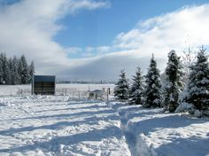 Tips for Keeping Your Chickens Warm and Alive in the Winter - American Preppers Network : American Preppers Network Best Egg Laying Chickens, Keeping Chickens, Raising Chickens, Backyard Farming, Chickens Backyard, Chickens In The Winter, Chicken Breeds, Chicken Coops, Warm In The Winter