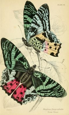 1858 - Foreign butterflies by James Duncan, Sir William Jardine, via bhl