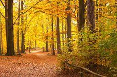Herbstlicher Wanderweg in der Sächsischen Schweiz