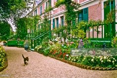 A cat saunters across a path in front of Monet's House in Giverny, France. It is said to be the same species of cat that Monet had.