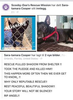 8 4 17 THIS IS HORRIBLE MURDERED BY HIS RESCUE RIP