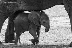 Finding some shade in the midday heat. Thanks Mum! (Serengeti Migration Camp) Photo credit: Ryan Mc Farlane