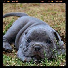 My puppy http://ift.tt/2lRaUY2