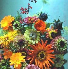 valokuvauskurssi-mobiilisti-hilmala Plants, Plant, Planets