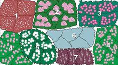 Pflanzenplan für rosarotes Staudenbeet