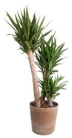 Woontrend Unexpected Wild Yucca Plant Diy Plant Stand