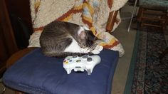 Look at who fell asleep while playing Xbox.