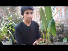 YouTube Orchid Care, Bonsai, Youtube, Plants, Natural, Gardens, Gardening, Take Care, Growing Orchids
