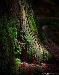 Forest Floor Foliage Door County Wisconsin; photo by Matt Anderson