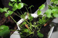 lapiz-sprout-01