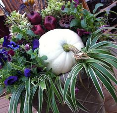 I love this container garden with the white pumpkin