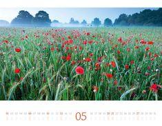 Vineyard, Plants, Outdoor, Moon Calendar, Morning Light, Day Planner Organization, Pocket Diary, Notebook, Colors
