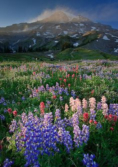 Fields of Color, Halo of Dust by Bryan Swan, via Flickr Mt. Rainier National Park August 2009