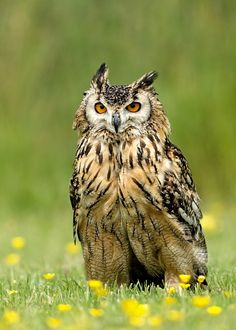 Photo Bubo bubo by Therion (Adrian Błaszczyk) on 500px