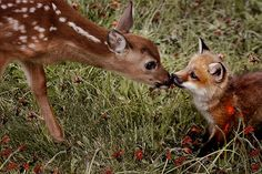 Just In Time For Valentine's: 22 Pictures Of Animals In Love