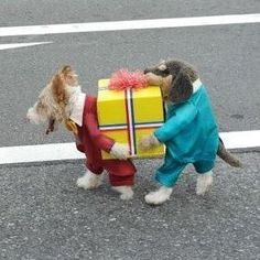 Best Pet Costume EVER! Leanne Vito needs this!!!