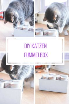 "DIY cat toy ""Fummelkiste"" - DIY Katzenspielzeug ""Fummelkiste"" Simply make your own cat toys Diy Jouet Pour Chat, Diy Cat Toys, Game Day Shirts, Diy Bebe, Angry Cat, Pinterest Diy, Cat Food, Toys For Girls, Cute Cats"