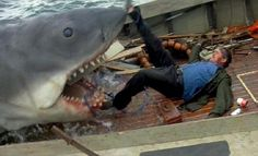 """The movie """"Jaws"""", directed by Steven Spielberg, based on the novel by Peter Benchley. Seen here from left, Roy Scheider as Police Chief Ma. Jaws Film, Jaws Movie, Film Movie, Shark Tale, Horror Pictures, Steven Spielberg, Great White Shark, Killer Whales, Predator"""
