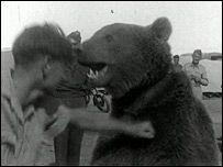 Voytek the bear - Picture courtesy Imperial War Museum
