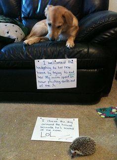 A painful lesson...soooo cute!