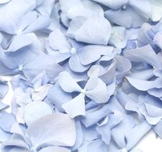 Suppliers of biodegradeable wedding confetti rose petals, ideal for aisle and table decor. Create the perfect wedding aisle with our preserved rose petals in a variety of colours. Green Wedding, Spring Wedding, Floral Wedding, Our Wedding, Wedding Flowers, Wedding Ideas, Dusty Blue Weddings, Wedding Confetti, Freeze Drying