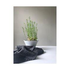 Linen flax plant + Fog & Moon 100% linen napkin.  www.underthefogandmoonstudio.com  #linen #natural #plant #textile #studio #naturalmaterials #homelinens #napkins #dining