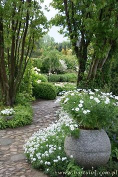 white garden with daisies in an urn...